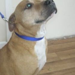 Found dog on 24 Oct 2018 in dublin... found in dublin dog pound...ashton web uploads 24th Oct