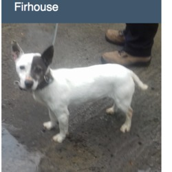 Found dog on 25 Apr 2018 in Firhouse Road. FOUND, NOW in the dublin dog pound..Date Found: