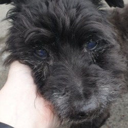 Found dog on 25 Apr 2019 in Clonsilla . found...Village Vets