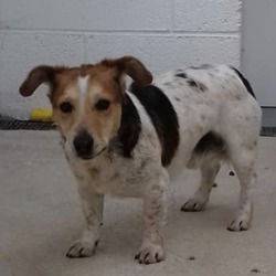 Found dog on 25 Apr 2019 in Garadice, kilcock,. found...Meath Dog Shelter