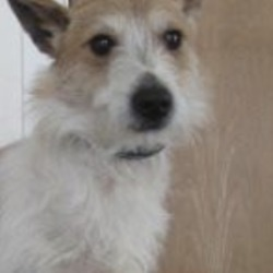 Found dog on 25 Apr 2019 in rathnew. found..Wicklow Dog Pound
