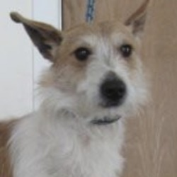 Found dog on 25 Apr 2019 in wicklow. found Wicklow Dog Pound