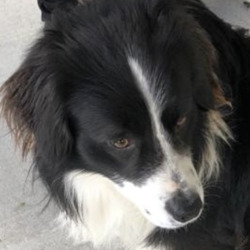 Found dog on 25 Feb 2021 in clare. found..Clare Dog Shelter