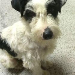 Found dog on 25 Jun 2018 in Clonard, Meath. Lovely male dog found in Clonard area, Meath.