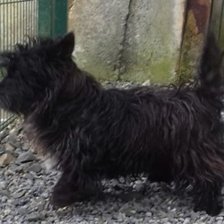 Found dog on 25 Jun 2019 in ATHBOY . found...Meath Dog Shelter