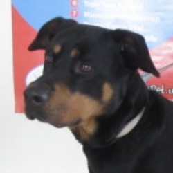 Found dog on 25 May 2021 in avoca. found...Wicklow Dog Pound MatySc 17flS asaptf ll1a1oensu:s3nadd0 ardoAredM  ·  Harry (pound name) is a male crossbreed found in the Avoca area. For further information please contact Wicklow Dog Pound at 0404-44873.