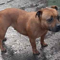 Found dog on 25 Nov 2019 in Tallaght. found, now in the dublin dog pound..Date Found: