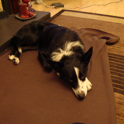 Found dog on 25 Oct 2009 in kncknacarra, galway. Male collie/mix about 1 year old. found 25/10/09 around dunnes stores, knocknacarra, galway. Black and white well trained and misses owners