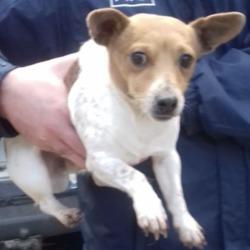 Found dog on 25 Oct 2018 in Jobstown Tallaght...... found, now in the dublin dog pound...Date Found: 22/10/2018 Location Found: Jobstown Tallaght