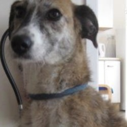 Found dog on 25 Oct 2018 in  Wicklow town. found...Wicklow Dog Pound   is a female crossbreed found in Wicklow town. For further information please contact Wicklow Dog Pound at 0404-44873