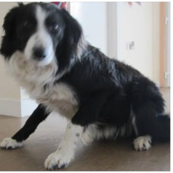 Found dog on 26 Apr 2018 in Ashford area. found...is a male Collie found in the Ashford area. Please contact Wicklow Dog Pound for further information at 0404-44873