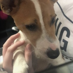 Found dog on 26 Jul 2019 in Liffey valley. found, now in the dublin dog pound..Does anyone know who owns this poor little baby?? We nearly knocked him/her down in TESCO Liffey valley car park! He looks like he jumped from a car window x he's really scared and I can tell he belongs to someone, can everyone PLEASE SHARE this post and see if we can find the owner. ASAP he's really distressed