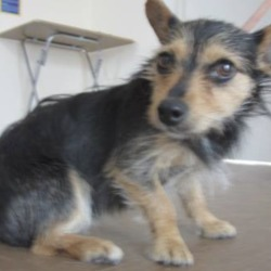 Found dog on 26 Jun 2018 in Arklow area. found...is a female terrier found in the Arklow area. Please contact Wickow Dog Pound at 0404-44873 for further details.