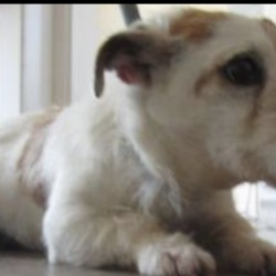 Found dog on 26 Jun 2018 in Kilmacanogue area. FOUND, are female terriers found together in the Kilmacanogue area. Please contact Wickow Dog Pound at 0404-44873 for further details.