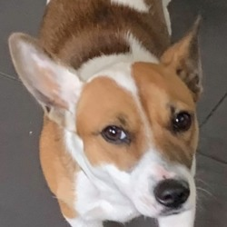 Found dog on 26 Jun 2019 in Dublin Road, Naas, . found.. K.W.W.S.P.C.A. 6 mins ·  FOUND IN NAAS  This young dog was found on the Dublin Road, Naas, last Thursday, 20 June. She is not microchipped but very friendly and in good condition. She is now in the care of the Kildare Dog Pound and will be coming into the care of the KWWSPCA next week if an owner has not claimed her. If she is your dog, please call the Dog Pound on 05986 23388 between 10 and 12.45 Mondays to Fridays to claim her. Proof of ownership will be needed.