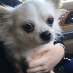 Found dog on 26 Nov 2018 in n2. found...FOUND