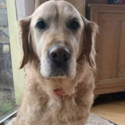 Reunited dog 27 Jan 2021 in wicklow. UPDATE REUNITED...lost..Lost Dogs Dublin