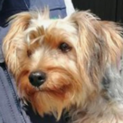 Reunited dog 27 Jul 2020 in Athboy Rd.. UPDATE REUNITED....found..Meath Dog Shelter 4m ·  Ref 121 122 & 123 FOUND John's rook Crossakiel/Athboy Rd. All female. Only one chipped and registered number is ringing out with no option of voice mail. Proof of ownership and fee required to reclaim PHONE 0870973911 10 till 2.30pm Mon to Sat.