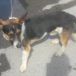 Found dog on 27 Jun 2018 in Dodsboro. found, now in the dublin dog pound...Date Found: 26/06/2018 Location Found: Dodsboro