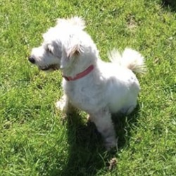 Reunited dog 27 Jun 2019 in ballivor. UPDATE REUNITED...found...Meath Dog Shelter 4 mins ·  Ref 183 stray  Little pumpkin was picked up in Ballivor, she is very friendly, good with other dogs. If not reclaimed she will be available for rehoming on 2/7/19. Please contact 0870973911