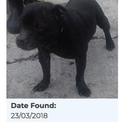 Found dog on 27 Mar 2018 in Brookview... found, now in the dublin dog pound...Date Found: 23/03/2018 Location Found: Brookview