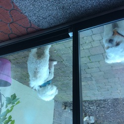Found dog on 27 Oct 2018 in Booterstown. 2 white dogs found this morning. Phone 0877733906