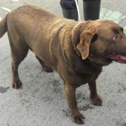 Reunited dog 27 Sep 2017 in Village , Newcastle . UPDATE REUNITED....found, now in the dublin dog pound.... Date Found: Tuesday, September 26, 2017 Location Found: Village , Newcastle