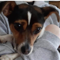Reunited dog 28 Jul 2020 in kildare. UPDATE REUNITED....found...Lost & Found Pets Kildare 12m ·  Found earlier in Monread, Naas. Is anyone missing this dog?