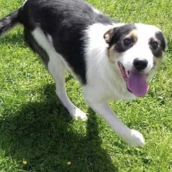 Found dog on 28 Jun 2019 in Carnaross. found..Meath Dog Shelter 21 mins ·  Stray  Clark was picked up just outside Carnaross, he is a lovely chap, very friendly Phone 0870973911 or pm the page with any information
