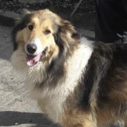 Found dog on 28 Mar 2020 in Clondalkin.... found, now in the dublin dog pound...Date Found: 26/03/2020 Location Found: Clondalkin