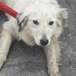 Found dog on 28 Mar 2020 in Clondalkin. found, now in the dublin dog pound..Date Found: 26/03/2020 Location Found: Clondalkin