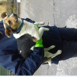 Found dog on 28 May 2018 in Rossfield Est. found tallaght, contact dublin dog pound...Date Found: 24/05/2018 Location Found: Rossfield Est