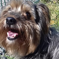Reunited dog 29 Apr 2021 in kells. UPDATE REUNITED...found...Meath Dog Shelter