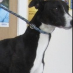 Found dog on 29 Jul 2019 in Avoca.. found...Wicklow Dog Pound