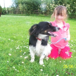 Found dog on 29 Jun 2010 in Newcastle West, Limerick. This dog turned up at out door in Newcastle West, Co. Limerick. He is wearing a red collar, and has some blue rope on the collar. He seems friendly, and is good with kids. Very timid, and doesnt like other dogs. Call 085-1388533