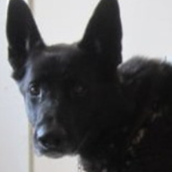 Found dog on 29 Jun 2021 in arklow. found, now in the dublin dog pound..Wicklow Dog Pound cJtstuomSpomnscot tnsoredow  ·  Cody (Pound Name) is a male German Shepherd found in Arklow. For further information please call Wicklow Dog Pound on 0404 44873. Thank you
