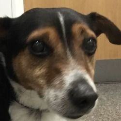 Found dog on 29 Mar 2019 in ballycullen. found...Firhouse VetsLike Page 10 hrs ·  This little guy was found this morning on Beachdale rd, Balleycullen. He is chipped and registered to the DSPCA and has a blue collar. Please call us on (01) 414 0830 for more details!