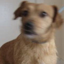 Found dog on 29 Nov 2018 in arklow. found..is a male crossbreed found in Arklow. For further information please contact Wicklow Dog Pound at 0404-44873.