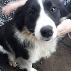 Found dog on 29 Nov 2018 in athboy.. found...Meath Dog Shelter shared a post. 2 hrs ·  STRAY REF 304 FOUND FRAYNE ATHBOY MEATH Please phone 0830424921 Proof of ID & ownership required.