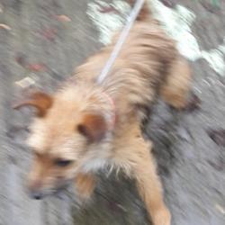 Found dog on 29 Nov 2018 in clondalkin. found...Date Found: 28/11/2018 Location Found: Village