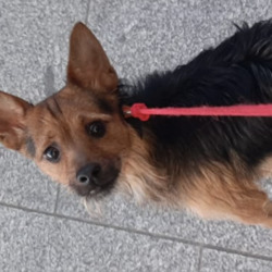 Found dog on 29 Sep 2020 in broadstone. found...Lost Dogs Dublin 2d  ·  DOG FOUND this dog was loose on the luas when I got on at broadstone. Walked up and down luas and no one claimed him. Driver was going to kick dog off luas on its own in the middle of town