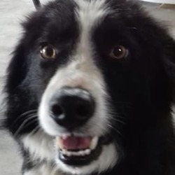 Found dog on 30 Apr 2019 in Castlepole Drumbaragh Kells. found..Meath Dog Shelter April 25 at 5:29 PM ·  Lovely male collie was found in Castlepole Drumbaragh Kells , this lad was picked up 3 weeks ago and held by the finder, please share far and wide incase the owner has stopped looking, contact 0870973911 or pm the page if you have any information
