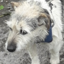 Found dog on 30 Apr 2019 in Springfield Road). found, now in the dublin dog pound.Date Found: 28/04/2019 Location Found: Springfield Road