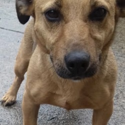 Reunited dog 30 Aug 2019 in navan. UPDATE REUNITED...found...Meath Dog Shelter