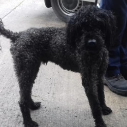 Found dog on 30 Aug 2019 in Woodview Navan. found..Meath Dog Shelter 24 mins ·  Stray Ref 256 Found Woodview Navan Male no collar not chipped Phone 0870973911 10-2.30 Mon-Sat Proof of ownership &reclaim fee required