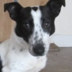 Found dog on 30 Dec 2019 in arklow. found..Wicklow Dog Pound December 28 at 11:24 AM ·  Dexter (pound name) is a male terrier cross found in the Arklow area. Please contact Wicklow Dog Pound on 0404-44873 for further information.