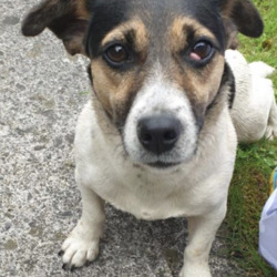 Found dog on 30 Jun 2020 in Clonbullogue . found... K.W.W.S.P.C.A. June 27 at 4:20 PM ·  found in Figile Manor, Clonbullogue at lunch time today, contact number is 0852772226