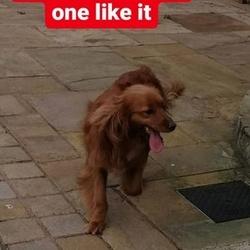 Found dog on 30 Mar 2020 in Castletown, Navan, Co Meath. 2 dogs found in Castletown, Navan. One large Male one smaller.