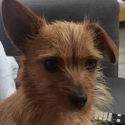 Found dog on 30 Mar 2020 in clondalkin. found..T.N.R West Dublin
