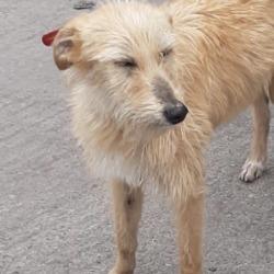 Found dog on 30 Mar 2020 in Tallaght. found, now in the dublin dog pound...Date Found: 27/03/2020 Location Found: Tallaght